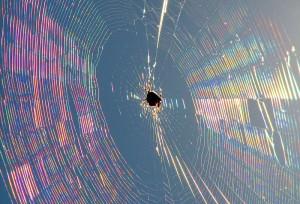 Kreuspinne im Netz © Public domain.