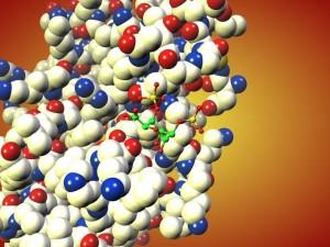 Ein kleines Molekül verhindert einen Fehlalarm im Immunsystem: Die disulfatierte Iduronsäure, dargestellt durch die kleinen durch Stäbchen verbundenen Kugeln (grün: Kohlenstoff; rot: Sauerstoff; gelb: Schwefel; Wasserstoff ist nicht dargestellt), schließt sich mit dem Chemokin CCL20, einem Signalprotein, zusammen, das dann nicht mehr an dem entsprechenden Rezeptor der T-Leukozyten binden kann. Die Entzündungsreaktion der weißen Blutkörperchen wird so gehemmt. © C. Rademacher