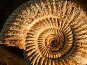Die im Meer lebenden Ammoniten haben mehrere Massenaussterben überlebt, bei denen bis zu 90 Prozent aller Tierarten ausgestorben sind. Endgültig verschwunden sind diese Tiere erst bei dem letzten Massenaussterben vor rund 65 Millionen Jahren. © 123RF/anyka