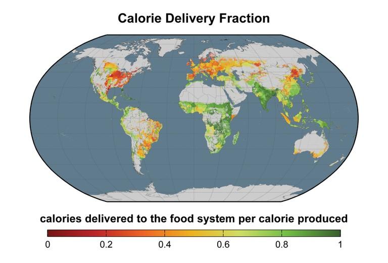 Geringe Effizienz in der Nahrungsmittelkette: Die rot eingefärbten Regionen gehen besonders verschwenderisch mit pflanzlichen Kalorien um - entweder, weil sie diese in die Tierernährung stecken oder für die Produktion von Bioenergie verwenden. Auch Deutschland könnte hier einen substanziellen Beitrag zu einer nachhaltigeren Nahrungsmittelproduktion leisten. © Science/AAAS (nach Cassidy et al., 2013; verändert)