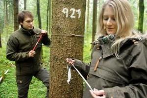 Cynthia Schäfer und Eric Thurm, Doktoranden am Lehrstuhl für Wachstumskunde, nehmen eine Jahresring-Probe von einem Baum auf einer Versuchsfläche. © L. Steinacker / TUM