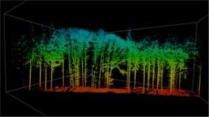 Mithilfe von Laser-Scans untersuchen die TUM-Wissenschaftler, wie sich Strukturen in Baumkronen verändern. © G. Schütze / TUM