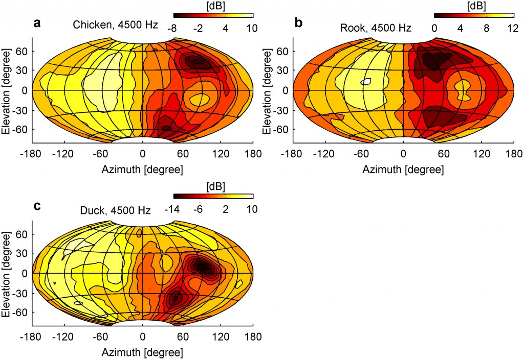 Lautstärkekarten  Erläuterungen: Die Bilder zeigen, wie bei Huhn, Ente und Krähe die Lautstärke am rechten Ohr bei Geräuschen aus verschiedenen Richtungen variiert.  © Schnyder HA, Vanderelst D, Bartenstein S, Firzlaff U, Luksch H (2014) The Avian Head Induces Cues for Sound Localization in Elevation. PLoS ONE 9(11): e112178. doi:10.1371/journal.pone.0112178