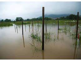 Das Juni-Hochwasser 2013 zeigte den Wissenschaftlerinnen und Wissenschaftlern des Jena Experiments, dass artenreiches Grasland von Überschwemmungen profitieren kann. © Victor Malakhov / iDiv