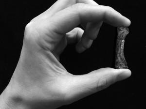Der Mensch kann kraftvoll und präzise zugreifen: Im Griff befindet sich der erste Metakarpal des Daumens eines Australopithecus africanus. © Tracy Kivell & Matthew Skinner