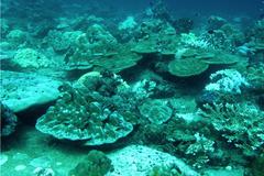 Korallenriff auf der Westseite einer Insel Korallenriff auf der Westseite einer Insel in der Andamanensee. Riffe in dieser Lage sind Internen Wellen und durch den Monsun ausgelösten Strömungen ausgesetzt. © Marlene Wall, GEOMAR