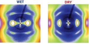 Röntgenblick auf Kollagen: Aus den Mustern der zweidimensionalen Röntgenbeugung lassen sich Informationen über Änderungen in der molekularen und nanoskopischen Kollagenstruktur gewinnen, wenn das Protein trocknet. Die Struktur des Kollagens ist für die Krafterzeugung ausschlaggebend. © Nature Communications 2015 / MPI für Kolloid- und Grenzflächenforschung