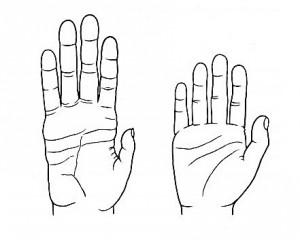 Vergleich einer Hand eines Schimpansen (links) mit der eines Menschen (rechts):  Im Vergleich zum Schimpansen hat die menschliche Hand kürzere Finger und Handflächen und einen längeren, stärkeren und flexibler beweglichen Daumen. Mit seiner Hand kann der Mensch Werkzeuge und andere Objekte gut bearbeiten. © Denise Morgan for the University of Utah. Usage Restrictions: None.