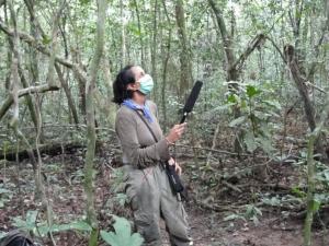 Erstautorin Ammie Kalan beim Aufnehmen der Schimpansenvokalisationen im Taï-Wald. © Ammie Kalan