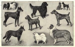 Hunde gibt es in allen Größen und Farben. Obwohl einige Gene identifiziert werden konnten, sind die generellen Mechanismen ihrer Vielfalt nach wie vor ungeklärt. © Heinrich Sperling
