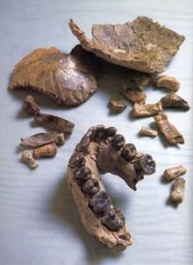 Das Fossil Olduvai Hominid 7 (OH 7) besteht aus einem Teil des Unterkiefers, Schädel- und Handknochen. © John Reader