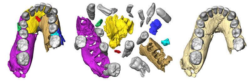 Computerdarstellung des Unterkiefers von Olduvai Hominid 7 (OH 7) so wie er aufgefunden wurde (die Bruchstücke ... [mehr] © Fred Spoor