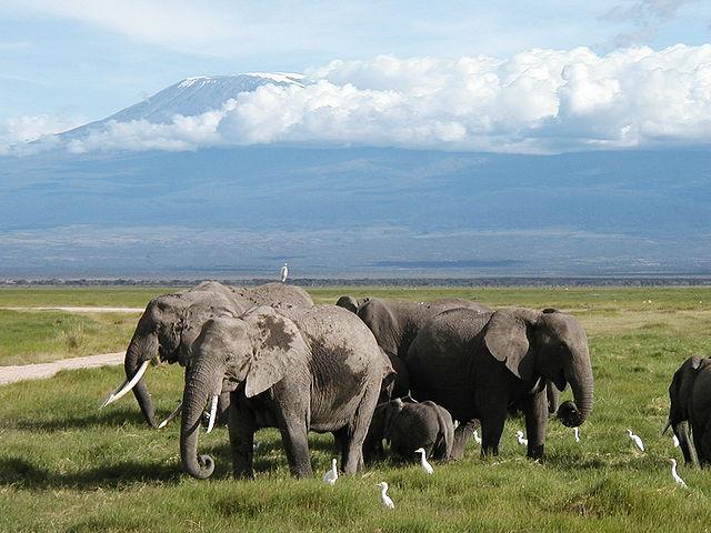 Elefantenherde © M. Disdero. CC BY-SA 2.5