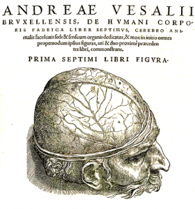 Die gefäßdurchzogene Hirnhaut in einer Abbildung von Andreas Vesalius (1543)