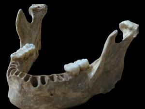 Das einem 40.000 Jahre alten Unterkiefer entnommene Erbgut zeigt, dass dieser moderne Mensch vor nur vier bis sechs Generationen einen Neandertaler-Vorfahren gehabt hatte. © MPI f. evolutionäre Anthropologie/ Pääbo