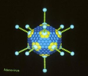 Computergraphik eines Adenovirus. © public domain.