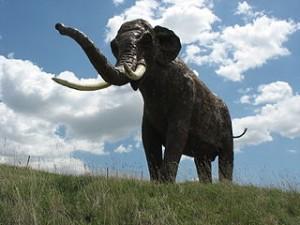 Der Europäische Waldelefant (Elephas antiquus) ist eines der großen Säugetiere, die vermutlich noch heute in Nordeuropa vorkommen würden, wenn der Mensch ihn nicht ausgerottet hätte. Heute sind die Tier ausgestorben. Das Bild stellt eine Rekonstruktion dar. © PePeEfe. CC BY-SA 3.0.