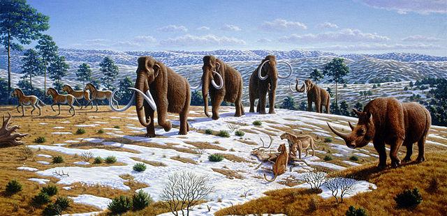 Mammute wurden vermutlich durch den Menschen ausgerottet. Das Bild zeigt eine späteiszeitliche Landschaft Nordspaniens mit Mammuten (Mammuthus primigenius), Pferden, Wollnashörner (Coelodonta antiquitatis) und Höhlenlöwen (Panthera leo spelaea) mit einem Rentierkadaver. © Mauricio Antón. CC BY 2.5.