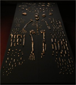 Knochenfunde von Homo naledi. © Paul H. G. M. Dirks et al. CC BY 4.0.