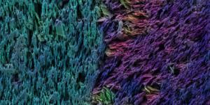 Querschnitt des künstlichen Zahns unter dem Elektronenmikroskop (Falschfarbenbild): Im Zahnschmelz sind Keramikplättchen vertikal angeordnet, im Zahnbein schräg bis horizontal. © Hortense Le Ferrand/ETH Zürich
