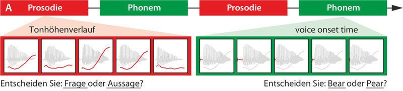 Die Probanden hatten zur Aufgabe, anhand der Tonhöhe zwischen einer Frage und einer Aussage zu unterscheiden. Als Vergleich zu dieser Prosodie-Aufgabe sollten sie darüber hinaus den Anfangsbuchstaben zweier ähnlicher Begriffe heraushören. © MPI f. Kognitions- und Neuroswissenschaften/ Sammler