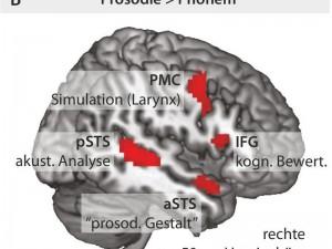 Beim Lösen der Prosodie-Aufgabe sind zwei Gruppen von Gehirngebieten in der rechten Hirnhälfte aktiv (rot). © MPI f. Kognitions- und Neuroswissenschaften/ Sammler