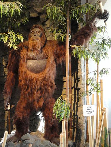 Modell eines Gigantopithecus blacki im San Diego Museum of Man. © gemeinfrei.