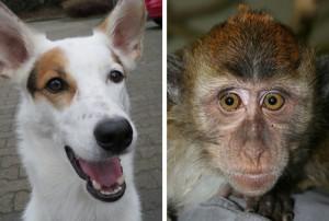 Hunde und manche Affen besitzen in ihren Augen Moleküle, mit denen sie möglicherweise das Magnetfeld der Erde wahrnehmen können. © L. Peichl