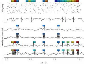 Am Computer hat Robert Gütig Neuronennetzwerke generiert und sie mit unterschiedlichsten Sinnesreizen (farbige Kästen) gefüttert, die sich in der Eingangsaktivität widerspiegeln (Punkte-Raster). Die schwarzen Kurven stellen die Membranpotentialverläufe der Modellnervenzelle dar: vor (oberste Kurve) und nach (zweite bis fünfte Kurven) verschiedenen Lernszenarien. Je nachdem ob und wie viel die einzelnen Sinnesreize zu einem Lernsignal beitragen, lernt die Zelle die zugehörigen Aktivitätsmuster aus der Eingangsaktivität herauszufiltern und mit einer bestimmten Anzahl von Aktionspotentialen zu kodieren. © MPI für experimentelle Medizin/R. Gütig