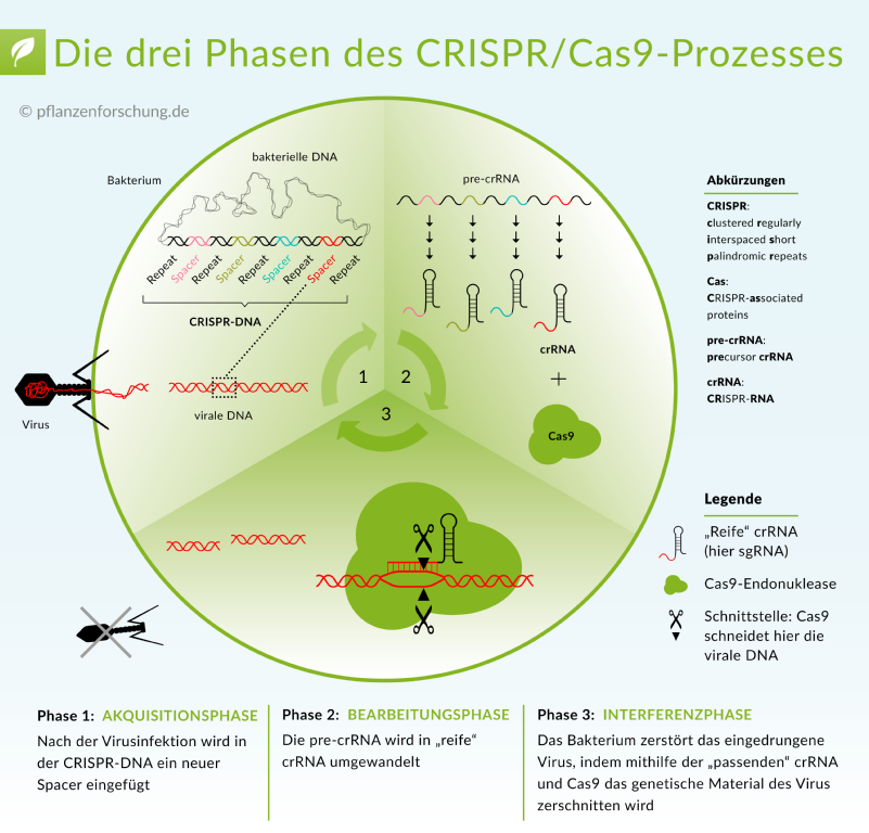© Pflanzenforschung.de. CC BY-SA 3.0