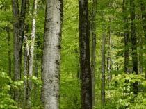 Homogene Wälder können auch weniger Dienstleistungen erbringen © Senckenberg.