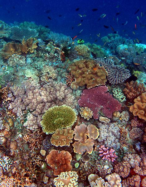 Korallenriffe sind sehr artenreiche Lebensräume. © Nick Hobgood. CC BY-SA 3.0