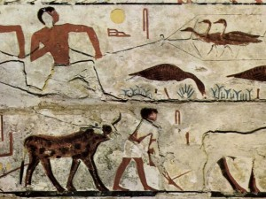 Seit Jahrtausenden prägen Menschen das Ökosystem - etwa durch Jagd, Landwirtschaft und die Domestizierung von Tieren. Ein Relief in der Grabkammer des Nefermaat zeigt Vogelfang (Gänse) und die Bestellung eines Feldes mit Rindern im Alten Ägypten um etwa 2500 vor Christus. © gemeinfrei
