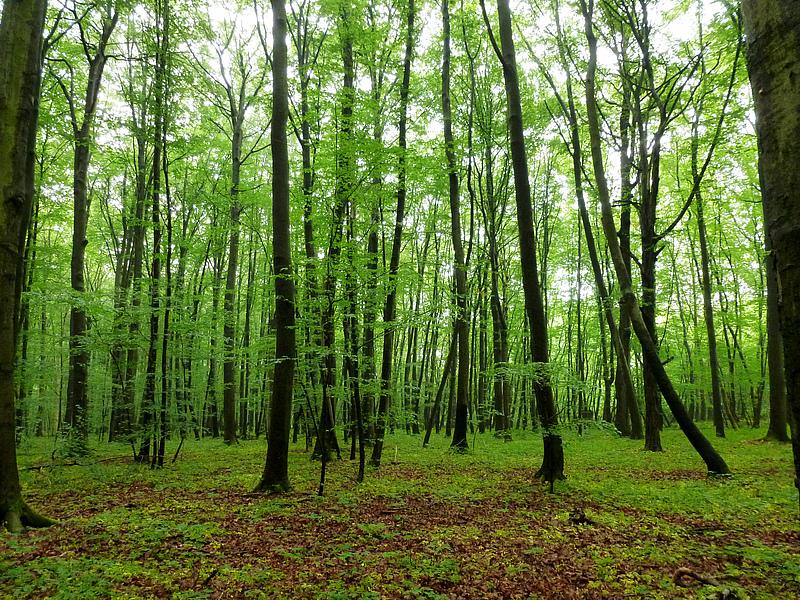Buchenwald, Nationalpark Hainich-Dün, Deutschland © Anett Richter, UFZ/iDiv
