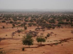 Die Sahelzone ist in den vergangenen 20 Jahren grüner geworden, weil der westafrikanische Monsun mehr Regen in das Gebiet südlich der Sahara bringt. Ein entscheidender Grund dafür liegt in der starken Erwärmung des Mittelmeers, wie Hamburger Klimaforscher jetzt herausgefunden haben. © Daniel Triveau / CIFOR (CC-BY-NC-ND 2.0)