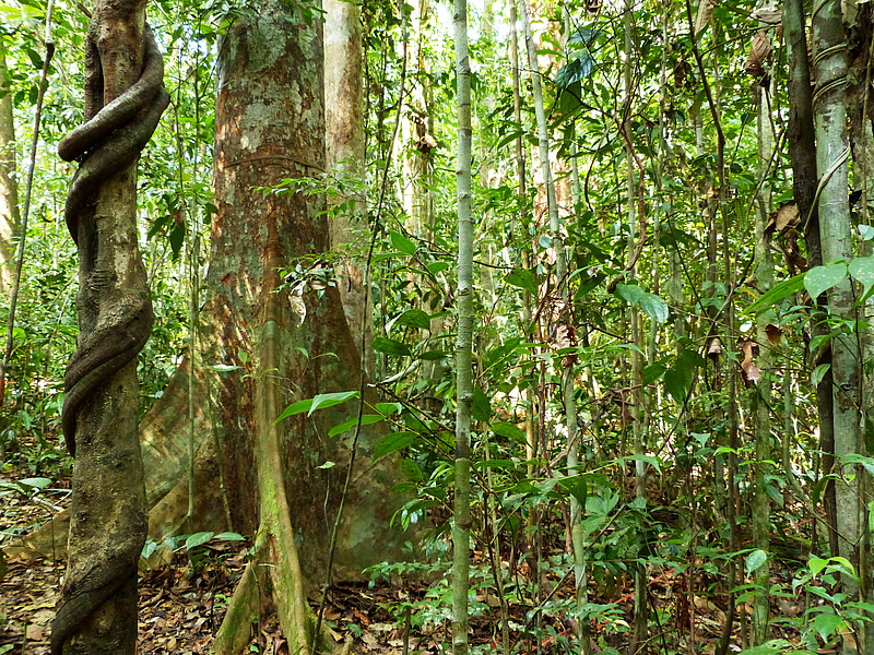 Tiefland-Regenwald, Sumatra, Indonesien. © Katja Rembold, Georg-August-Universität Göttingen
