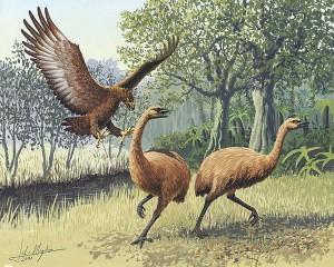 Zwei Moas auf Neuseeland werden von einem Haaastadler angegriffen. Auch diese beiden Tierarten wurden von den eingewanderten Menschen ausgerottet. © John Megahan. CC BY 2.5.