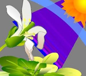 V Strahlen des Sonnenlichts können Pflanzen schädigen, was u.a. zu einer Zerstörung von Blattzellen und Schäden in Blüten führen kann. © Takayuki Tohge, MPI-MP