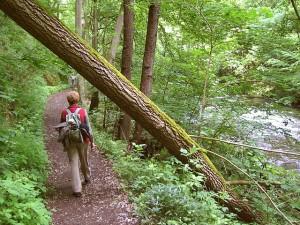 Wer sich fit hält, bewältigt auch Stress bei der Arbeit besser. Das gelingt etwa durch Wandern, Nordic Walking oder Radfahren © Michael Fiegle. CC BY-SA 3.0. Wikimedia Commons.